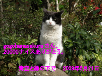 20000_090521-fbe95.jpg