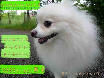 3333記念green_blue_skyさまへ.jpg